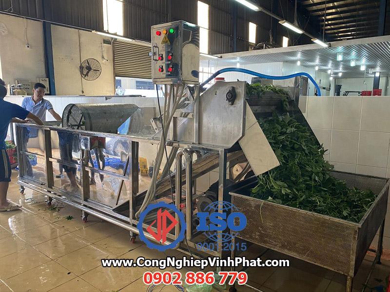 Máy rửa rau công nghiệp: rau má, rau lang, lá mì, cần tây, diếp cá...