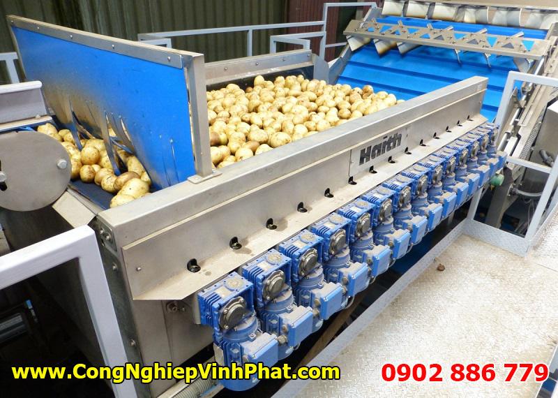 Dây chuyền máy rửa nông sản, máy rửa khoai tây, máy rửa rau củ quả năng suất cao